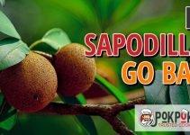 Does Sapodilla Go Bad?
