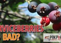 Do Serviceberries Go Bad?