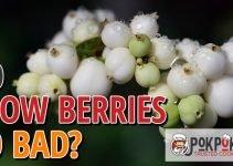 Do Snow Berries Go Bad?