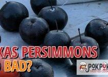 Do Texas Persimmons Go Bad?