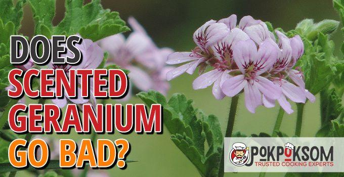 Does Scented Geranium Go Bad