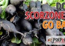 Does Scorzonera Go Bad?