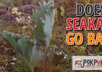 Does Sea Kale Go Bad?
