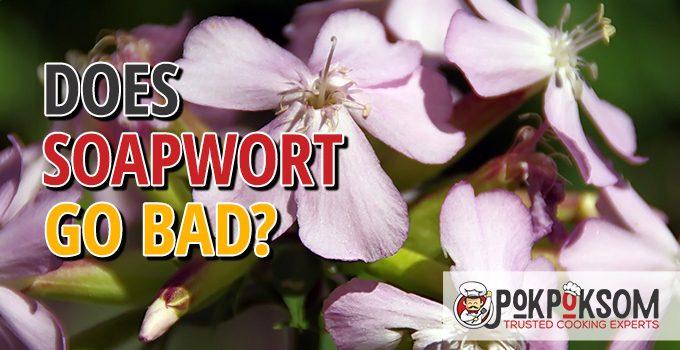 Does Soapwort Go Bad