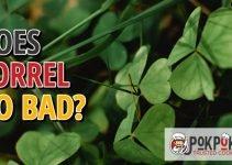 Does Sorrel Go Bad?
