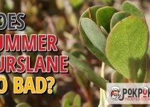 Does Summer Purslane Go Bad?