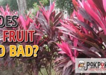 Does Ti Fruit Go Bad?