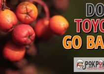 Does Toyon Go Bad?