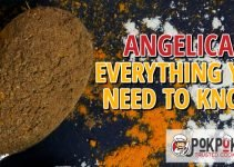 Angelica: Everything You Need To Know