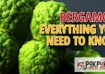 Bergamot: Everything You Need To Know