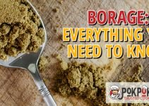 Borage: Everything You Need To Know