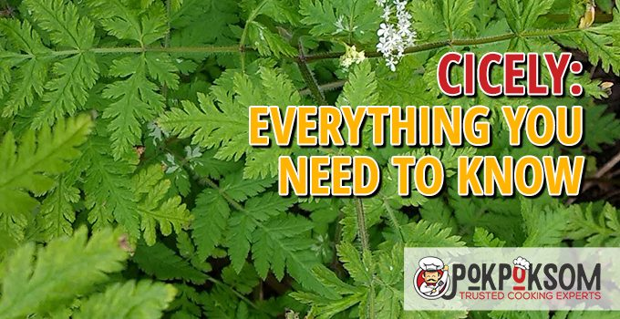 Cicely Everything You Need To Know