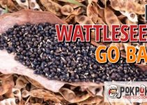 Does Wattleseed Go Bad?