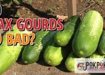 Does Wax Gourd Go Bad?