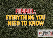 Fennel: Everything You Need To Know