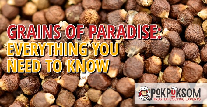 Grains Of Paradise Everything You Need To Know