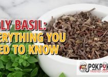 Holy Basil: Everything You Need To Know