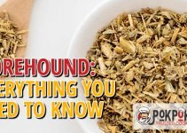 Horehound: Everything You Need To Know