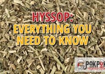 Hyssop: Everything You Need To Know