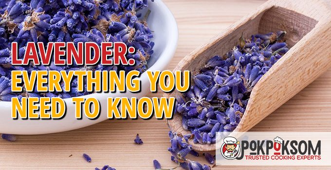 Lavender Everything You Need To Know