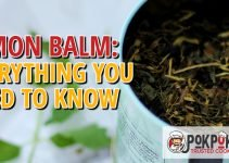 Lemon Balm: Everything You Need To Know