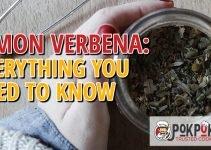Lemon Verbena: Everything You Need To Know