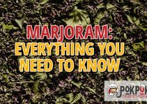 Marjoram: Everything You Need To Know