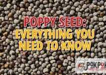 Poppy Seed: Everything You Need To Know
