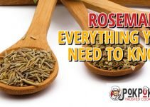 Rosemary: Everything You Need To Know
