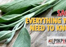 Sage: Everything You Need To Know
