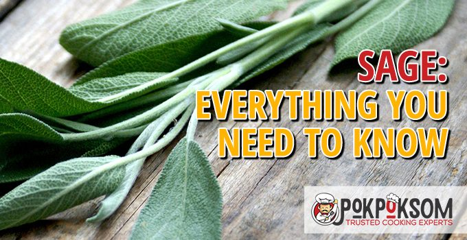 Sage Everything You Need To Know