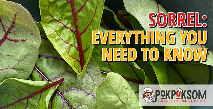 Sorrel Everything You Need To Know