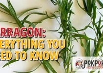 Tarragon: Everything You Need To Know