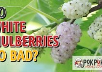 Does White Mulberry Go Bad?