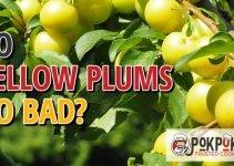 Does Yellow Plum Go Bad?