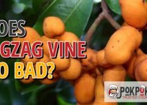 Does Zigzag Vine Go Bad?